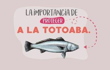 totoaba